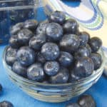 Blueberry Bushes from Gurney's Seed
